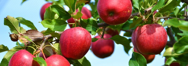 Belliveau Orchard Trip (Oct 04)